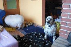 <h3>Jůlinka doma</h3><p>Foto: facebook Julinka z Nusli</p><hr /><a href='http://www.facebook.com/sharer.php?u=http://www.milujuprahu.cz/2014/02/prase-ktere-bydli-u-synkace-v-cinzaku-ma-jmeno-rikaji-ji-julinka/' target='_blank' title='Share this page on Facebook'><img src='http://www.milujuprahu.cz/wp-content/themes/twentyten/images/flike.png' /></a><a href='https://plusone.google.com/_/+1/confirm?hl=en&url=http://www.milujuprahu.cz/2014/02/prase-ktere-bydli-u-synkace-v-cinzaku-ma-jmeno-rikaji-ji-julinka/' target='_blank' title='Plus one this page on Google'><img src='http://www.milujuprahu.cz/wp-content/themes/twentyten/images/plusone.png' /></a><a href='http://www.pinterest.com/pin/create/button/?url=http://www.milujuprahu.cz&media=http://www.milujuprahu.cz/wp-content/uploads/2014/02/603625_190960757724637_1132132900_n.jpg&description=Next%20stop%3A%20Pinterest' data-pin-do='buttonPin' data-pin-config='beside' target='_blank'><img src='http://assets.pinterest.com/images/pidgets/pin_it_button.png' /></a>