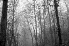 <h3>Stromy v Hostivaři</h3><p>Tahle cesta vede od hostivařské přehrady směrem k ulici U Břehu. Běžně toto stromořadí asi není nijak zajímavé, ale jakmile je mlha, stává se z toho rázem hezká podívaná s nádechem mystiky. - Foto: Robin Rezek</p><hr /><a href='http://www.facebook.com/sharer.php?u=http://www.milujuprahu.cz/2014/02/prazske-mlhy-robina-rezka/' target='_blank' title='Share this page on Facebook'><img src='http://www.milujuprahu.cz/wp-content/themes/twentyten/images/flike.png' /></a><a href='https://plusone.google.com/_/+1/confirm?hl=en&url=http://www.milujuprahu.cz/2014/02/prazske-mlhy-robina-rezka/' target='_blank' title='Plus one this page on Google'><img src='http://www.milujuprahu.cz/wp-content/themes/twentyten/images/plusone.png' /></a><a href='http://www.pinterest.com/pin/create/button/?url=http://www.milujuprahu.cz&media=http://www.milujuprahu.cz/wp-content/uploads/2014/02/hostivar-stromy1.jpg&description=Next%20stop%3A%20Pinterest' data-pin-do='buttonPin' data-pin-config='beside' target='_blank'><img src='http://assets.pinterest.com/images/pidgets/pin_it_button.png' /></a>