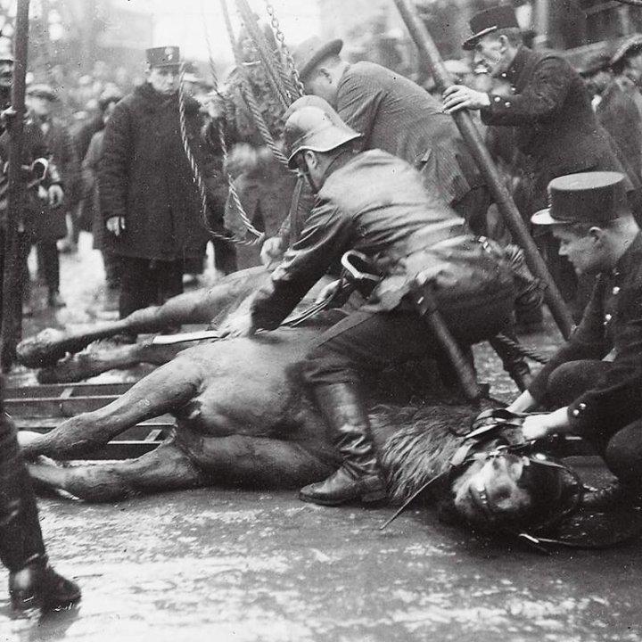 Kůň se podložil spojenými břevny a žebříky.... - Foto: archic prazskeho hasicskeho sboru