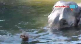 Podívejte se, jak se koupe slon v pražské zoo