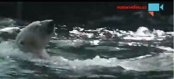 Foto: z videa Moniky Sladké