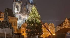 Na Staroměstském náměstí vztyčili vánoční strom! Podívejte se na něj…