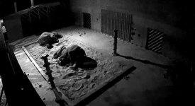 Nové fotky ze ZOO. Jak vlastně spí sloni?