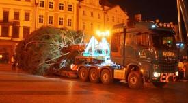 A je tu! Vánoční strom se hrdě tyčí na Staroměstském náměstí. Podívejte se