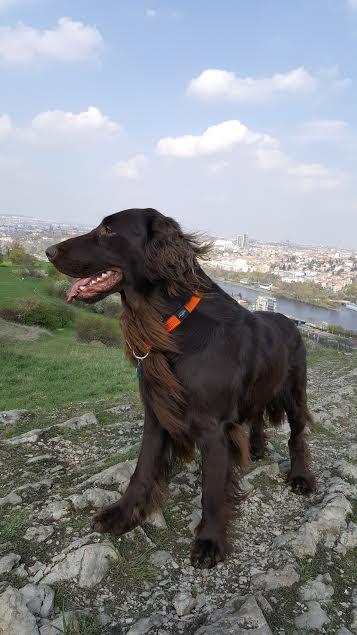 Místo je ideální pro venčení psů - Foto: David Černý
