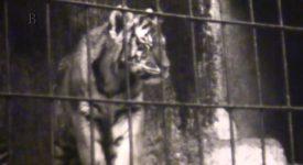 Když jsme byli ještě malí. Exkluzivní záběry z pražské zoo let sedmdesátých
