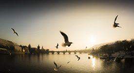 Praha je krásné místo, kde chci žít a fotit, vyznal se Ivan Svatoš