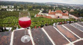 VINOBRANÍ SV. KLÁRY: Objevte krásy vinice nad Trojským zámkem