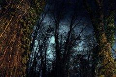 <h3>Malostranský hřbitov o Dušičkách</h3><p>Foto: Martin Šlapák</p><hr /><a href='http://www.facebook.com/sharer.php?u=https://www.milujuprahu.cz/tajemny-malostransky-hrbitov-o-dusickach/' target='_blank' title='Share this page on Facebook'><img src='https://www.milujuprahu.cz/wp-content/themes/twentyten/images/flike.png' /></a><a href='https://plusone.google.com/_/+1/confirm?hl=en&url=https://www.milujuprahu.cz/tajemny-malostransky-hrbitov-o-dusickach/' target='_blank' title='Plus one this page on Google'><img src='https://www.milujuprahu.cz/wp-content/themes/twentyten/images/plusone.png' /></a><a href='http://www.pinterest.com/pin/create/button/?url=https://www.milujuprahu.cz&media=https://www.milujuprahu.cz/wp-content/uploads/2013/11/1391559_611220162257552_1519938653_n.jpg&description=Next%20stop%3A%20Pinterest' data-pin-do='buttonPin' data-pin-config='beside' target='_blank'><img src='https://assets.pinterest.com/images/pidgets/pin_it_button.png' /></a>
