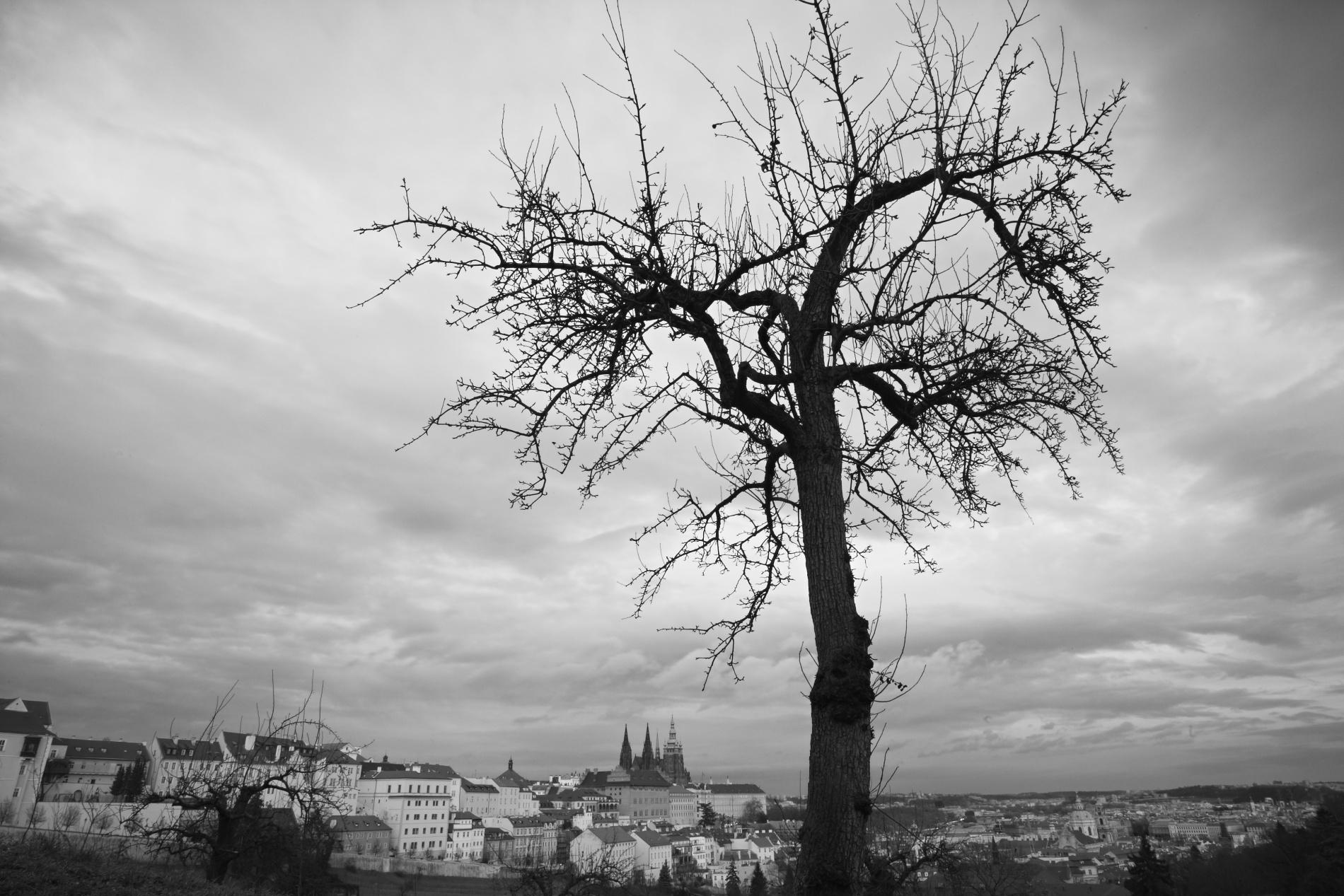Praha_18.12.2011_216