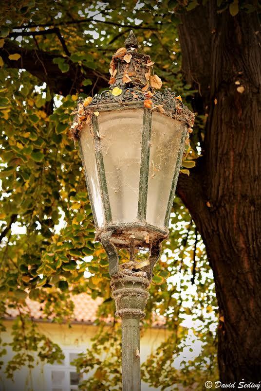 Lampa na Kampě - Foto: David Šedivý
