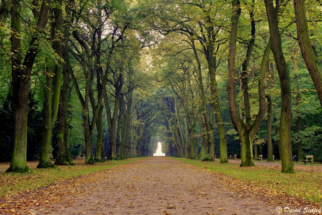 Podzim ve Hvězdě - Foto: David Šedivý