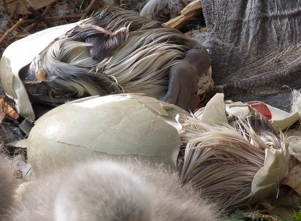 Labuťata - Foto: Filip. L. Skála