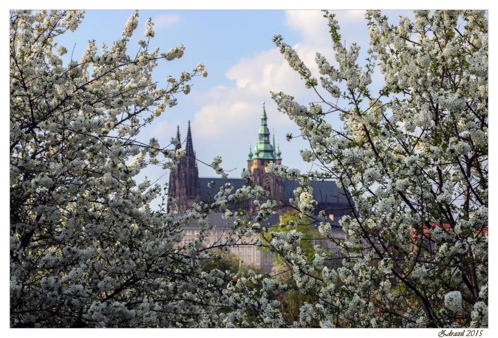 Pohled na Pražský Hrad – v rozkvetlých májových sadech Petřína - Foto: Martin Zdražil