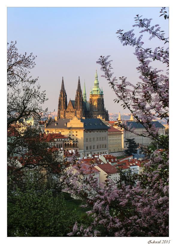 Zlaté věže Pražského Hradu v zapadajícím květnovém slunci - Foto: Martin Zdražil
