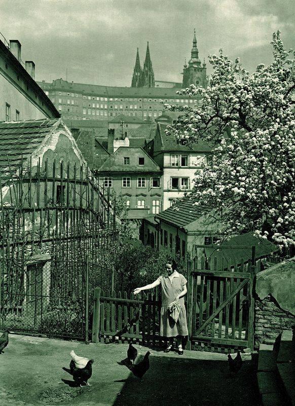 Krmení slepic ve Vlašské ulici - Foto Jan Posslet (1931)
