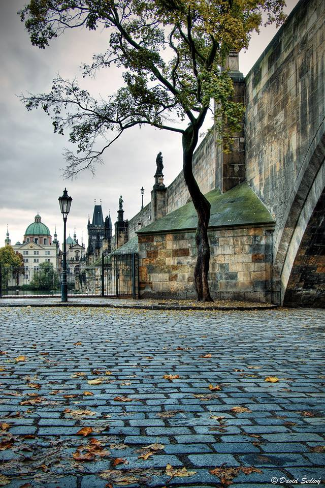 Podzim u Karlova mostu - Foto: David Šedivý