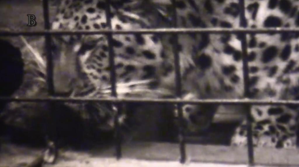 Pražská zoo na přelomu 70. a 80. let minulého století - Foto: repo z videa Jaroslava Mareše - badatlele.net