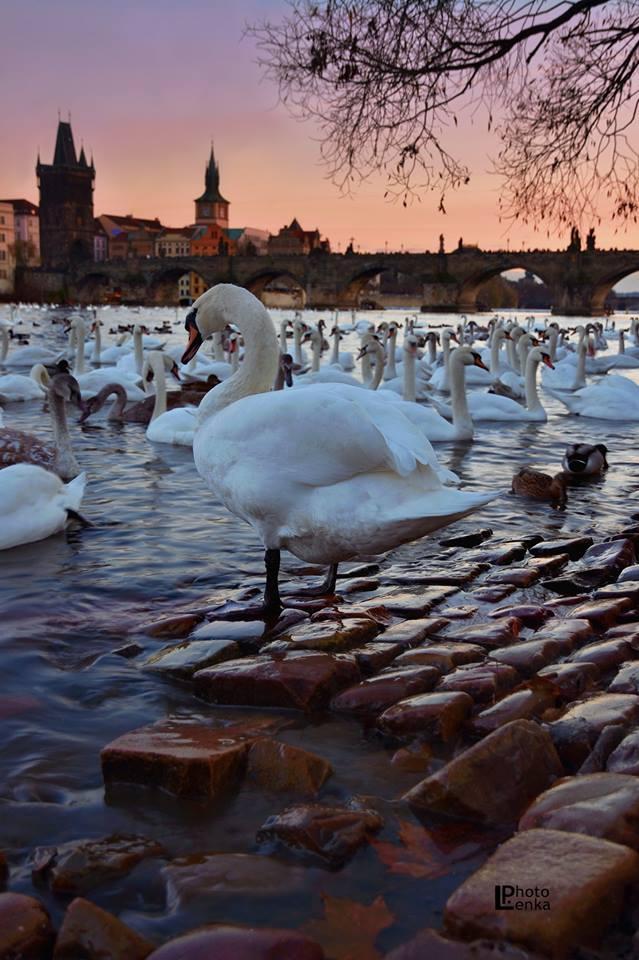 Čekání na zimu - Foto: Lenka Petruželová